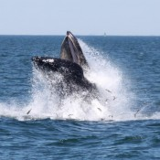 Whale Watching Experience Near New York City