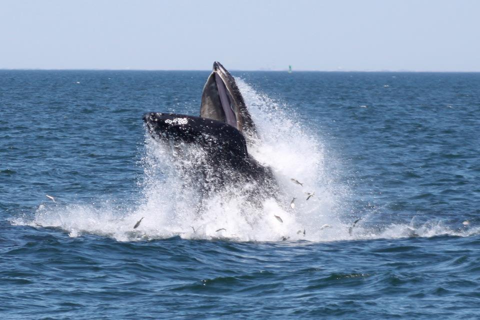 whale watching near new york city